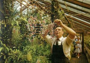 В орхидейной оранжерее