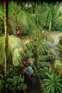 в пальмовой оранжерее