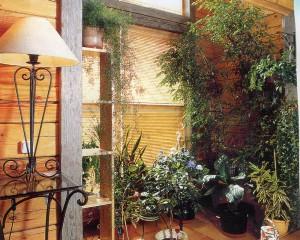 Уголок с комнатными растениями в доме