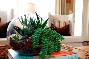 Озеленение интерьера в доме