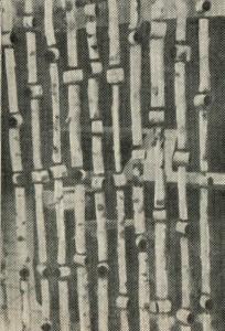 декоративная решётка (берёза)