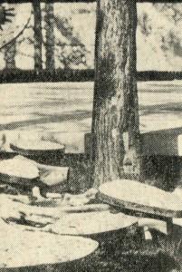 скамьи из дерева