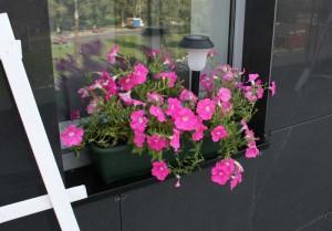 Цветы и интерьер