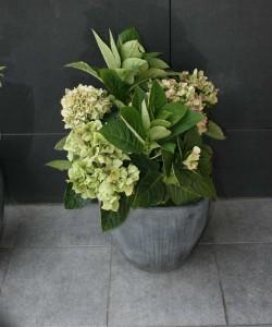 Цветок в горшке в интерьере кафе.