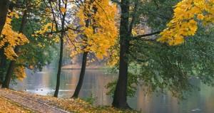самые зеленые районы москвы