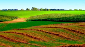 Кадастровая оценка земель, а также работа оценщиков не должна быть обременительной для граждан,