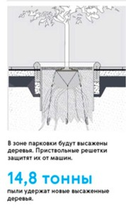 ЗАЩИТА ДЕРЕВЬЕВ В МОСКВЕ
