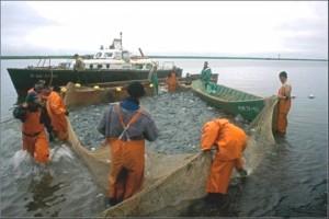 Закон о рыболовстве 2016