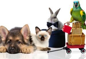 Ярмарочно-выставочный центр домашних животных