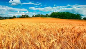 Продажа сельхозугодий на Кубани