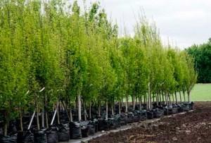 деревьев и кустарников
