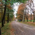 Парк Дубки в Химках