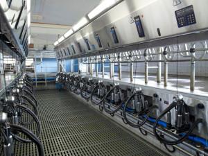Молочно-товарная ферма в Наро-Фоминском районе