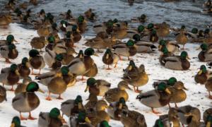 Парк водоплавающих птиц Москва