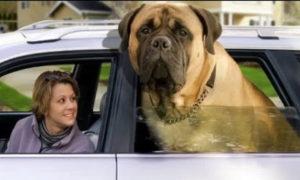 Пес с ним, с законом.