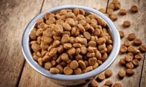 Более 11 тонн кормов для кошек и собак