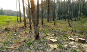 Минприроды перечислило, подо что можно вырубать лес в создаваемых вокруг мегаполисов
