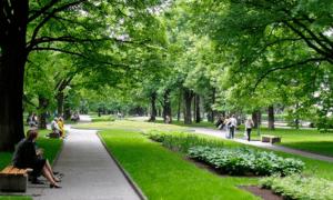 благоустройство парков