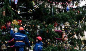 Главная новогодняя елка России будет отправлена в Москву для установки возле