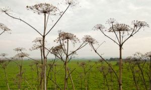 Налог на неиспользуемые участки земли предложили