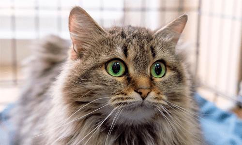 Выставка кошек в добрые руки «Неслучайная встреча»
