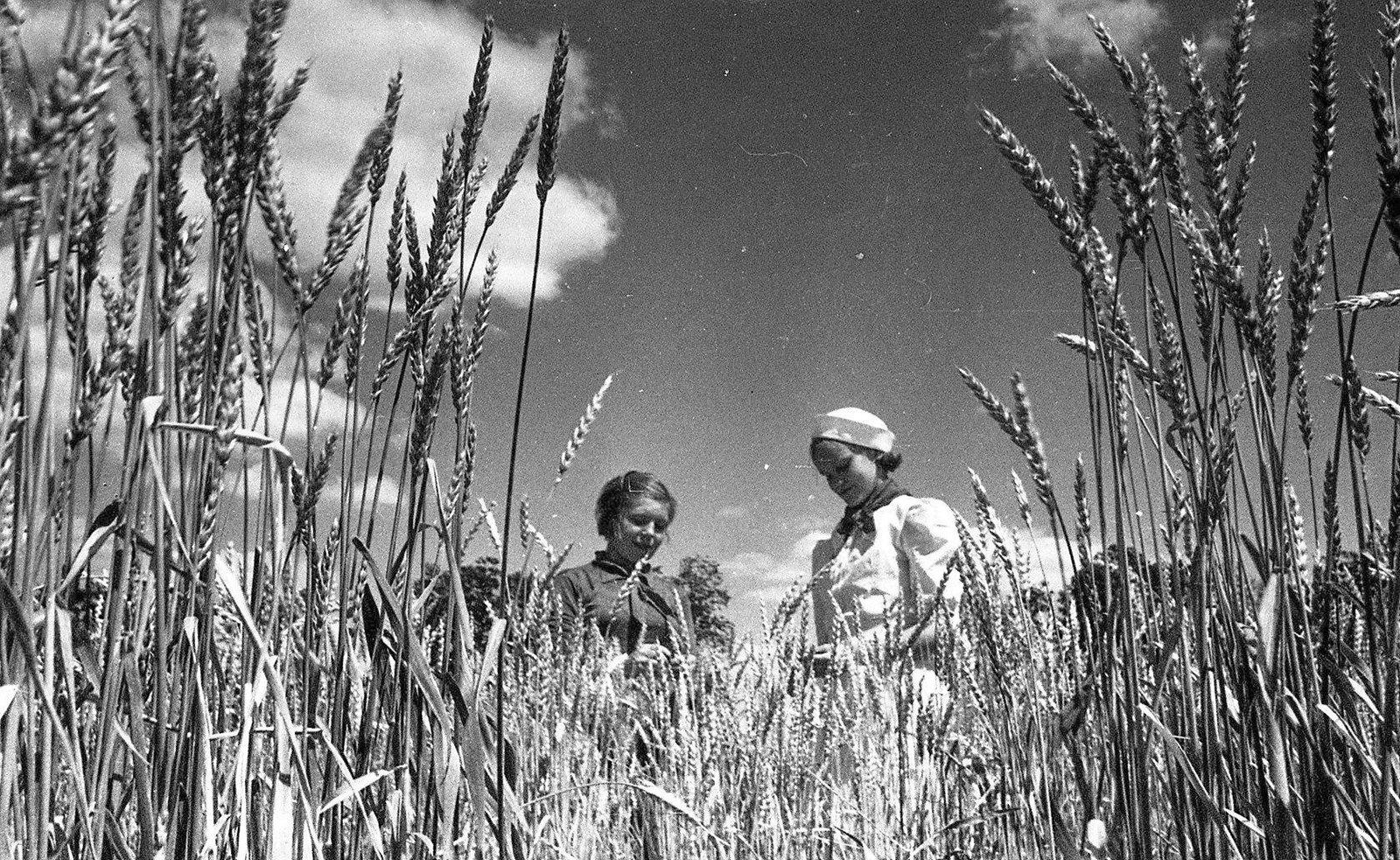 Юннаты на опытном поле. Автор В. Микоша. 1938 год. Из коллекции МАММ