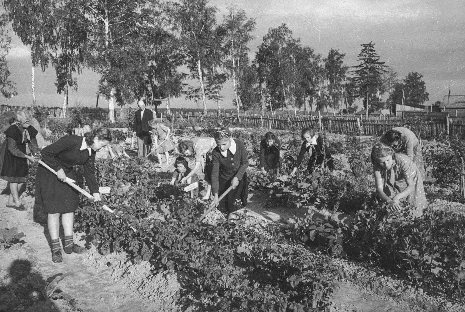 Юннаты на пришкольном участке. Автор С. Васин. 1930-е годы. Из коллекции МАММ