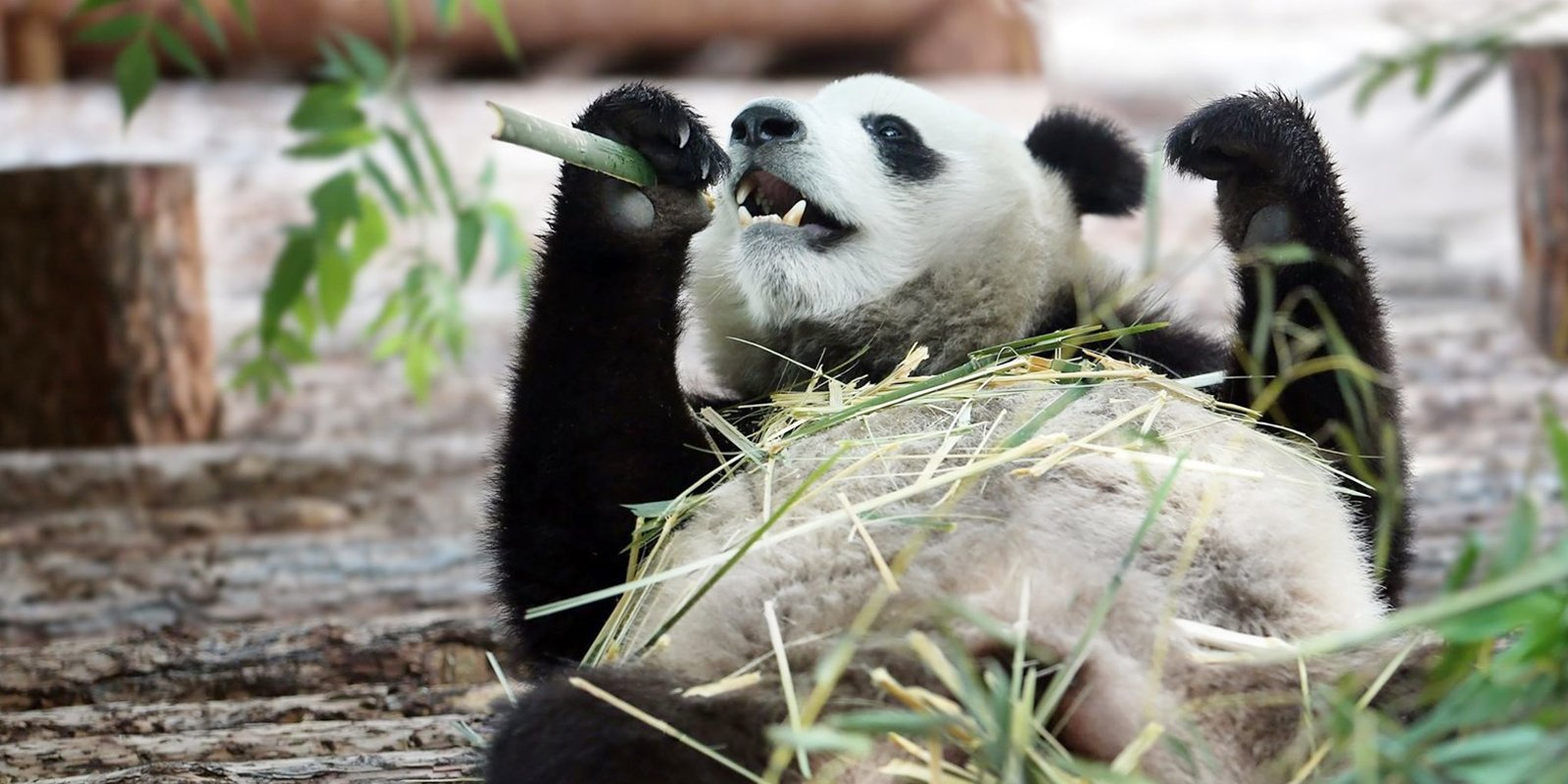 Фото: пресс-служба Московского зоопарка