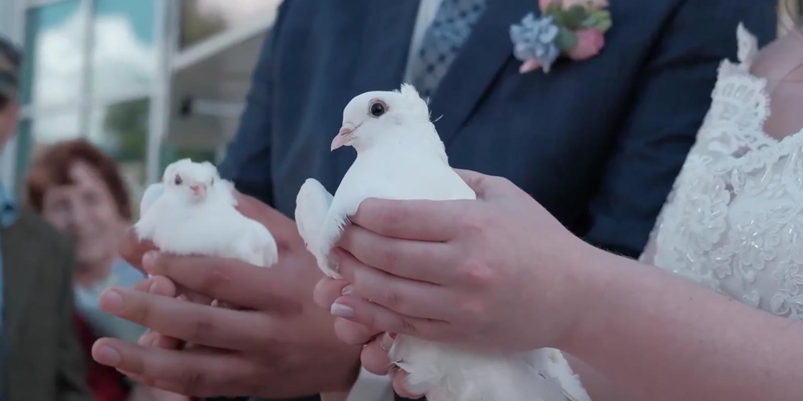 Кадр из ролика «Москва глазами голубей»