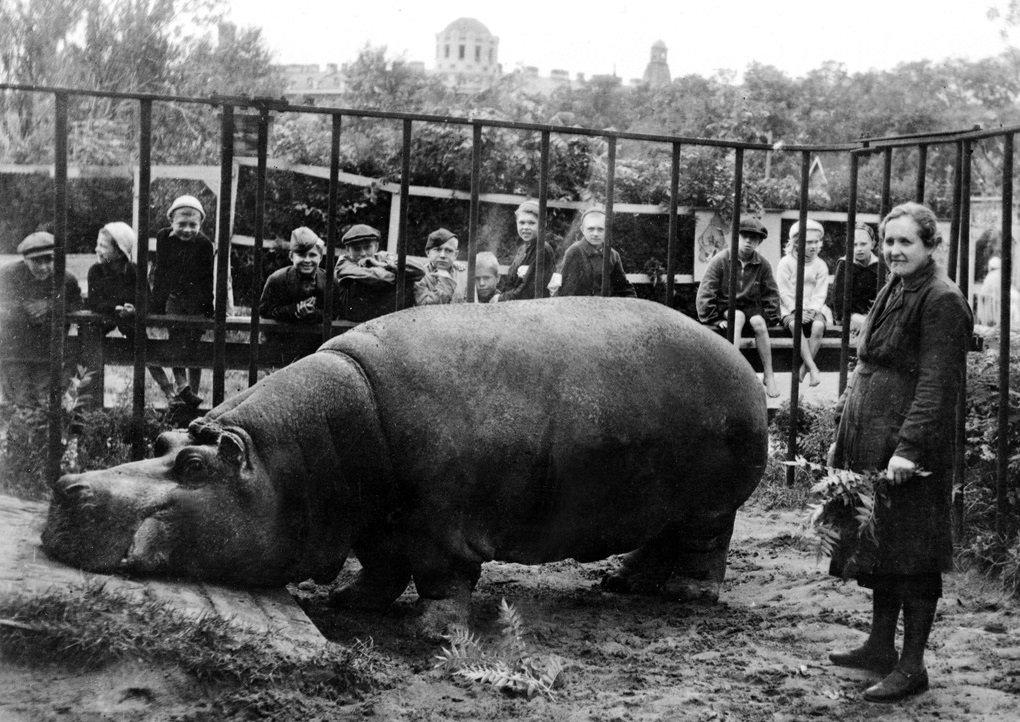 Зоопарк в годы войны_Г.jpg
