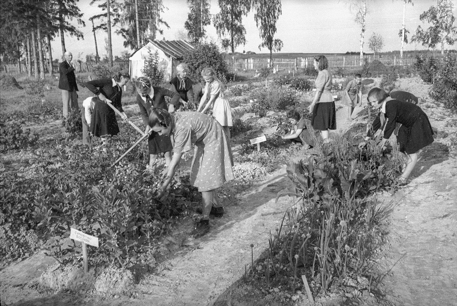 Юннаты работают на делянках. Автор С. Васин. 1947 год. Из коллекции МАММ