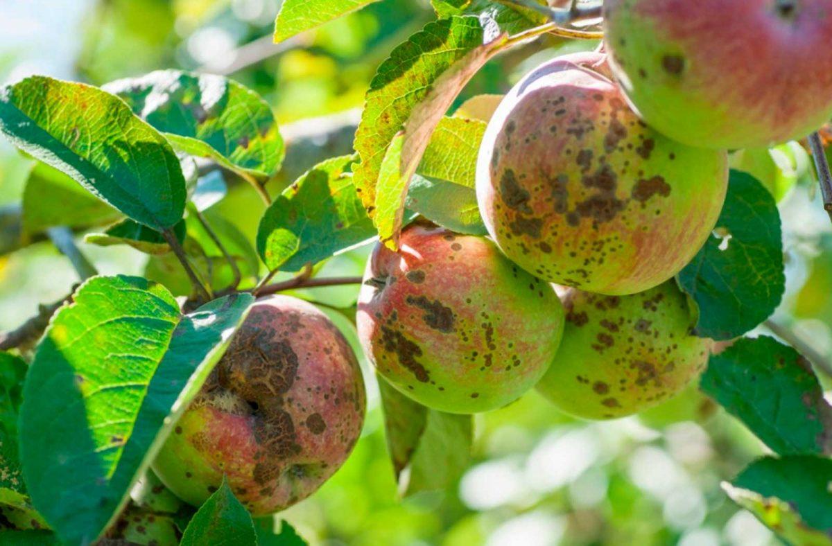 Вредители плодовых культур