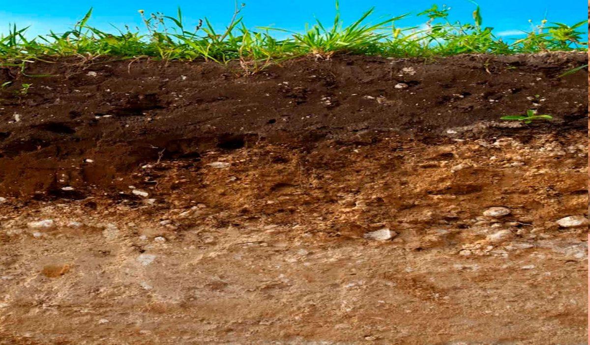 режим почвы
