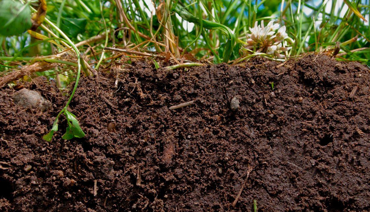 Понятие о почве