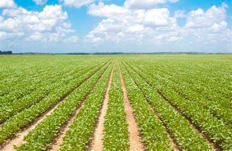 Растениеводство термин