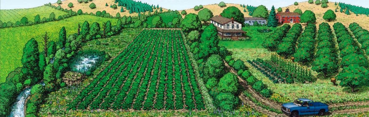 Системы земледелия севооборот
