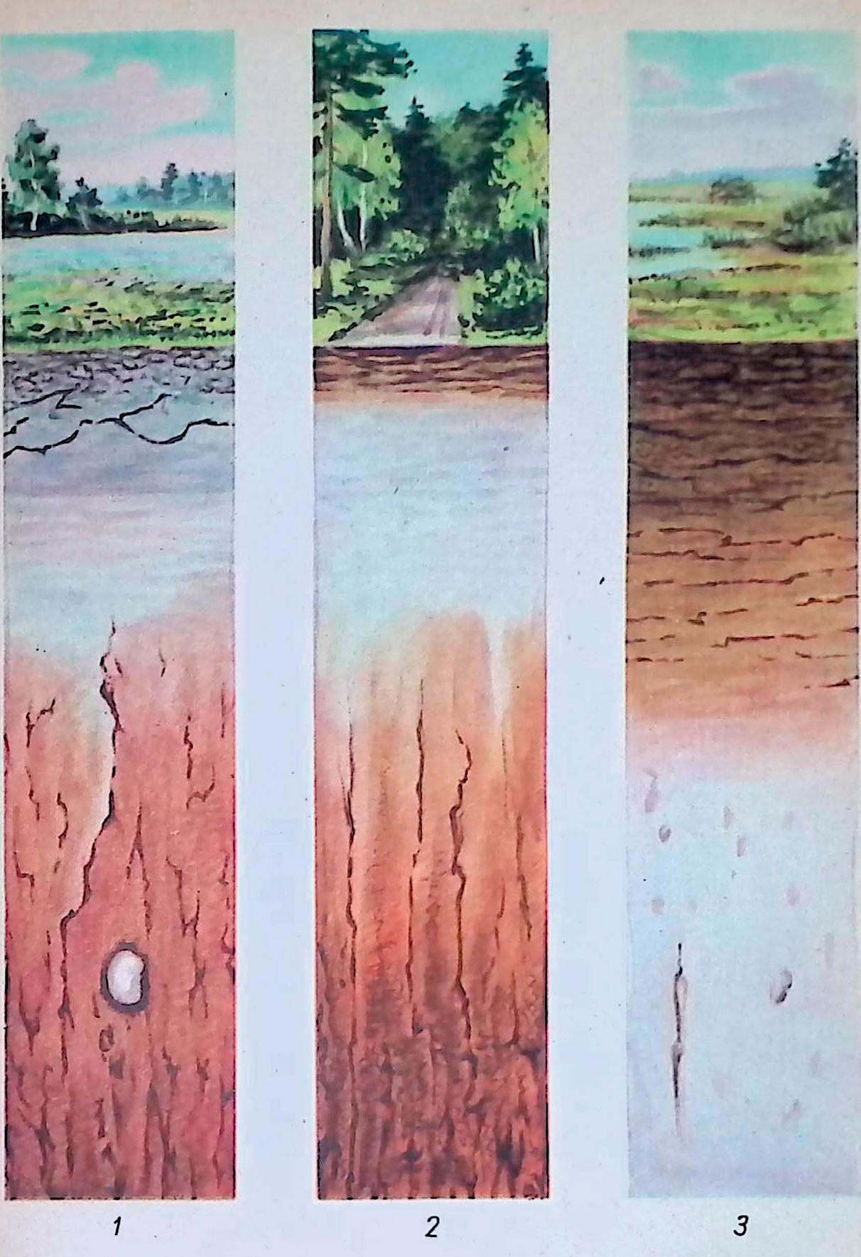 дерново - подзолистая почва; 2— подзол; 3—профиль лугового торфяника