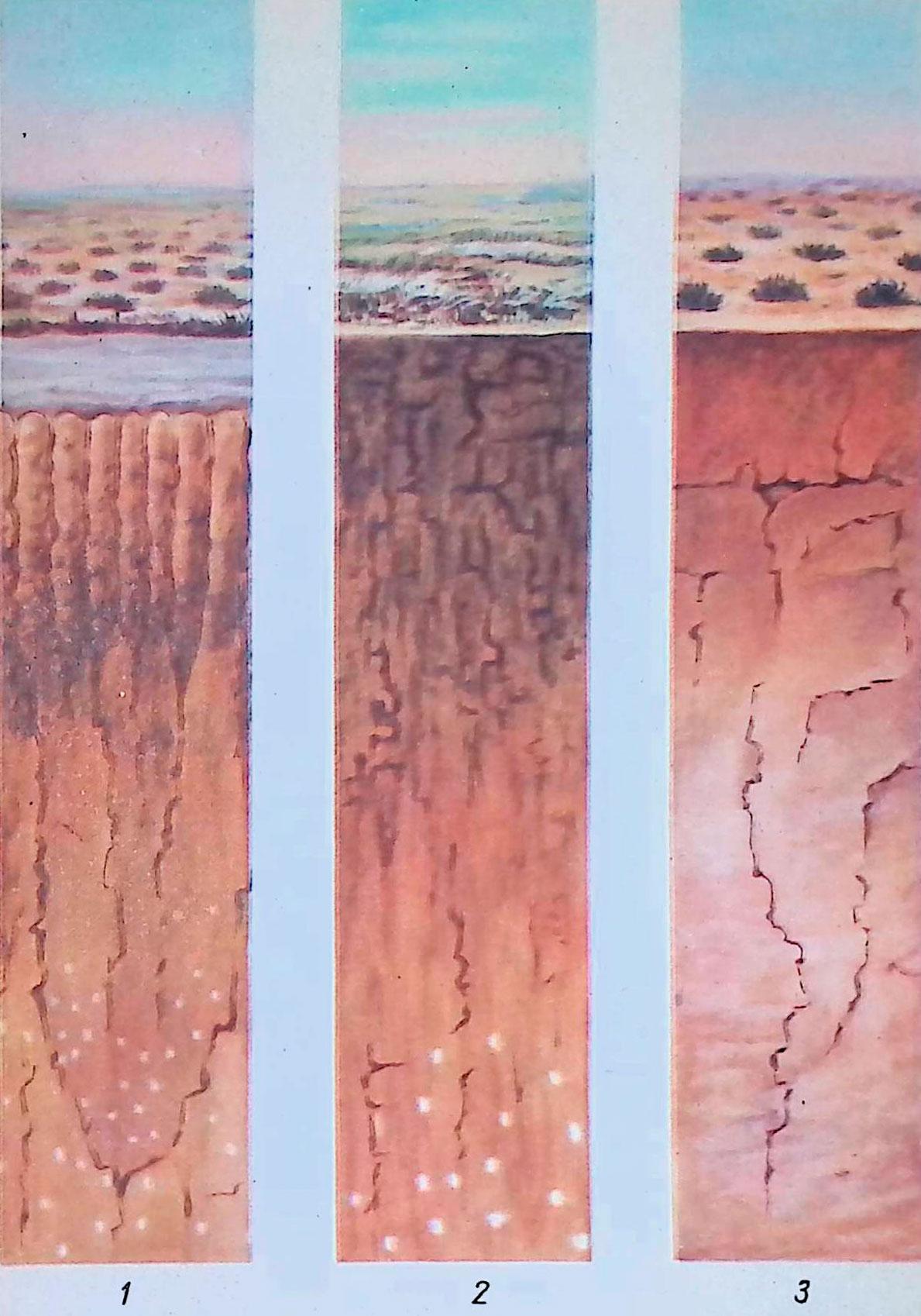 1—солонец; 2— каштановая почва; 3—бурая почва