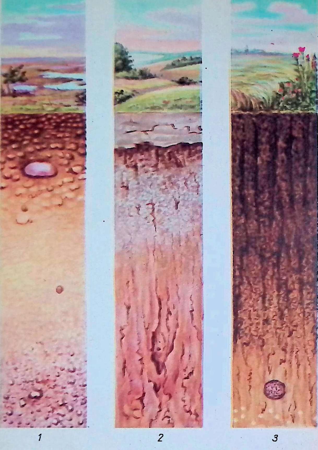 1 тундровая почва; 2 — серая лесостепная почва; 3 — мощный чернозем.
