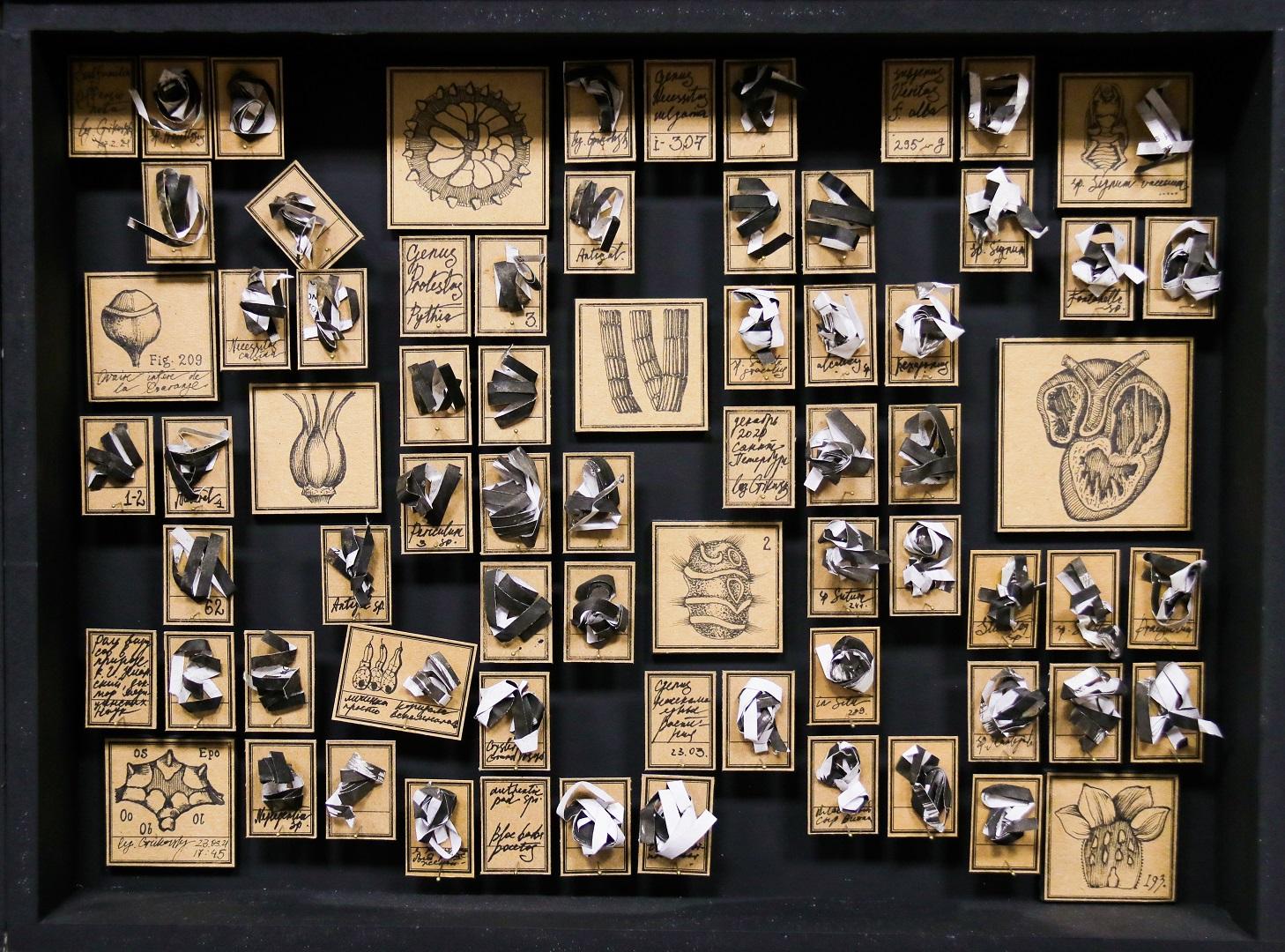 Музей чепухи из 16 коробок, 30х40см, бумага, тушь, энтомологические булавки, 2020-2021