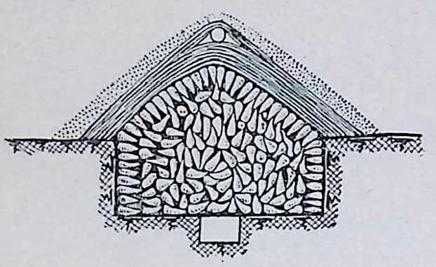 Хранение корнеплодов в траншее с верхней и нижней вентиляциями